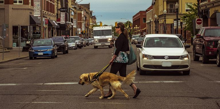 A woman and her Golden Retriever guide dog cross the street.